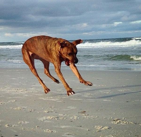 Những bức ảnh bắt trọn khoảnh khắc vui tính của động vật khiến ai cũng phải phì cười
