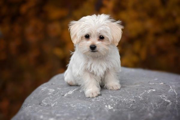 Tức giận vì không được chủ tiệm hoàn tiền, nữ khách hàng ném chết chú chó con 3 tháng tuổi