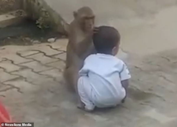 Chú khỉ Ấn Độ bắt cóc em bé để có người chơi cùng, còn ôm khư khư không chịu trả cho ai