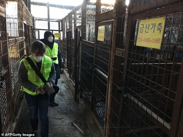 Thị trưởng Seoul đưa ra tuyên bố chính thức: 'Sẽ đóng cửa tất cả các lò giết thịt chó ở đây'