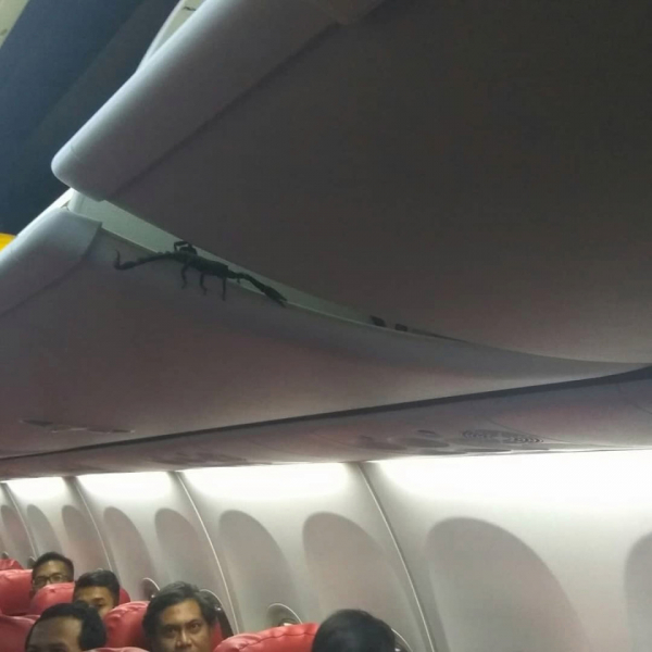 Như phim: Đang ở trên máy bay thì phát hiện bò cạp lơ lửng trên đầu