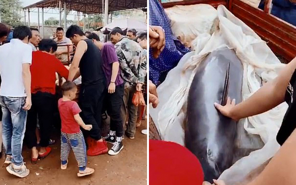 Cá heo chảy nước mắt khi sắp bị cân ký bán thịt tại một khu chợ Trung Quốc