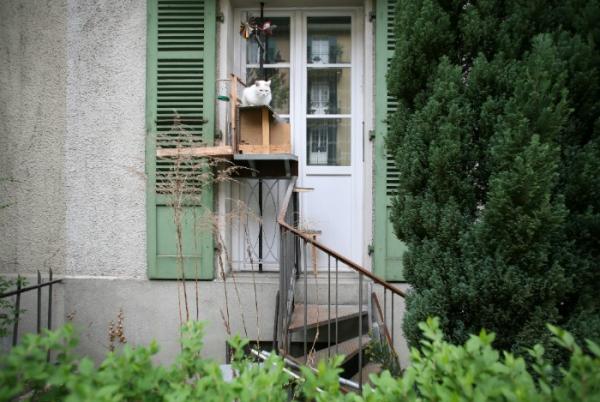Ở Thuỵ Sĩ, người ta xây... hàng trăm cầu thang cho mèo đi chơi thật dễ cưng làm sao