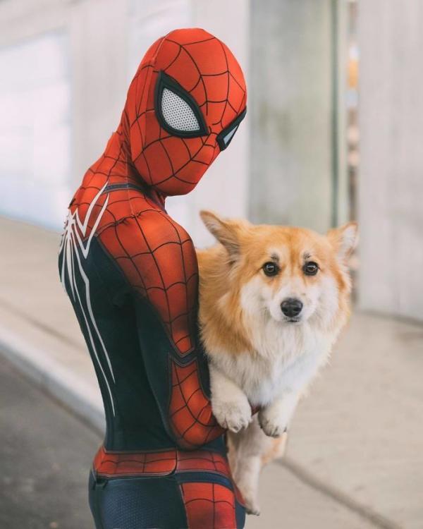 Khi bé chó Corgi trở thành nhân vật chính trong các poster phim bom tấn