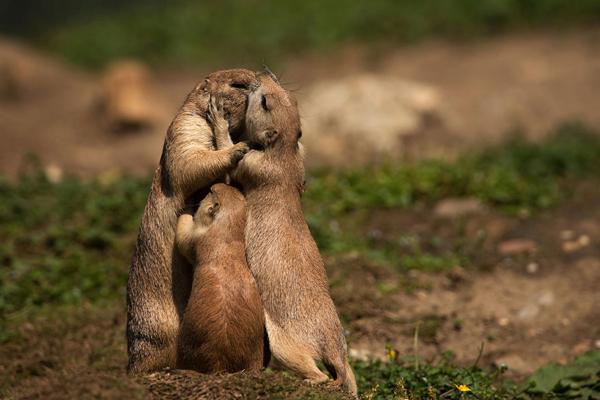 21 bức hình chứng minh động vật hoang dã cũng có tình cảm gia đình