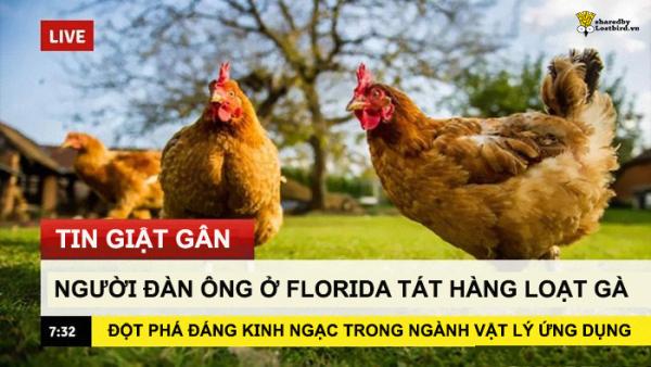 Sinh viên chuyên lý chỉ cách 'tát để nấu chín con gà', dân mạng lại được dịp cười nội thương với loạt meme mới