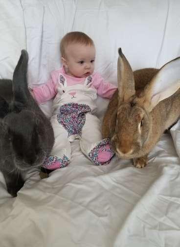 Cặp thỏ khổng lồ trở thành những 'nhà trị liệu' cho trẻ em