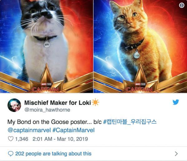 Những chú mèo muốn trở thành Goose của 'Captain Marvel': Sống trên đời ai chẳng có ước mơ