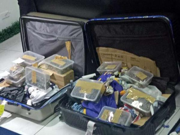 Hải quan sân bay Philippines phát hiện nhiều vali buôn lậu rùa sống