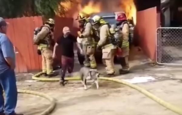 'Con sen' dũng cảm bất chấp lửa lớn, xông vào giải cứu 'boss chó' mắc kẹt trong đám cháy