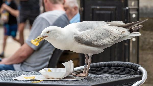 Toà kết án người đàn ông giết chim mòng biển chỉ vì ăn cắp đồ ăn của ông ta