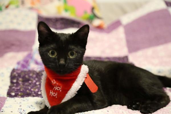 Shuri - Cô mèo 'chiến binh' ngừng phát triển cân nặng kể từ 6 tháng tuổi