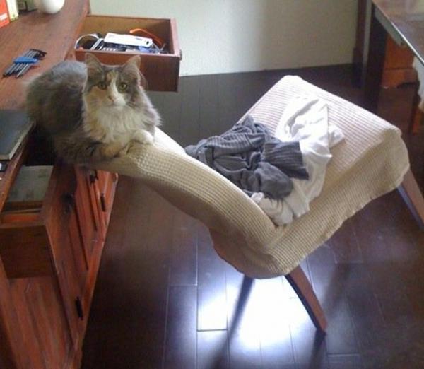 Khi các boss mèo 'mình thích thì mình làm thôi' khiến 'con sen' không thể nào hiểu được