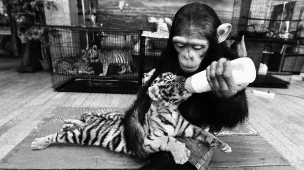 Không phải mỗi con người mới có cảm xúc mà cả động vật cũng vậy