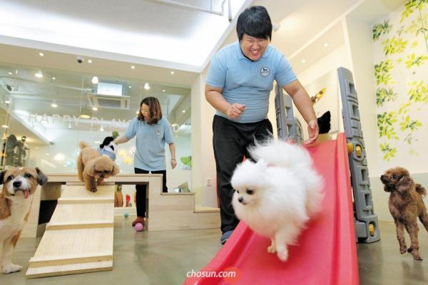 Hài hước chuyện chó Hàn Quốc đi học mẫu giáo: Ngày học 6 tiết còn có sổ liên lạc và kiểm tra bài cũ