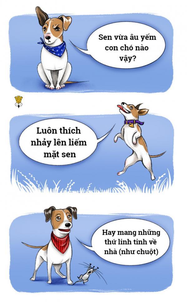 'Chết cười' với thói quen đáng yêu của những giống chó nổi tiếng (P1)