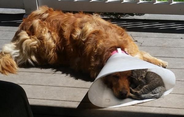 'Cười nghiêng ngả' với những vị trí nghỉ ngơi ưa thích của động vật