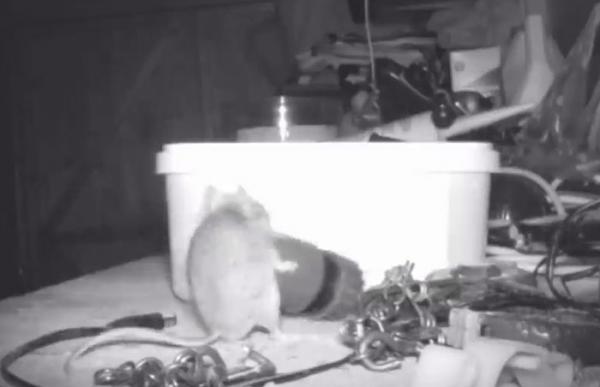 Em là ai, con chuột hay nàng tiên mà mỗi đêm đều đến dọn dẹp giúp người?