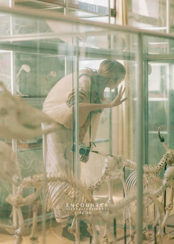 Lên Đà Lạt chụp ảnh 'sống ảo' cùng xương khủng long, bạn có muốn thử?