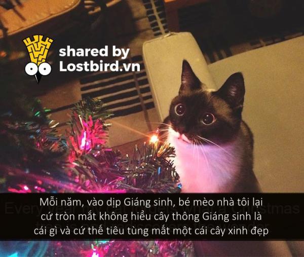 Những bé mèo hài hước này sẽ khiến một ngày mệt mỏi của bạn tan biến (Kì 2)