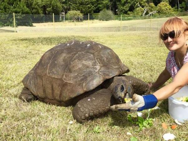 'Cụ' rùa được sinh ra từ khi thế giới vẫn chưa có bóng đèn, xe hơi nửa thế kỉ sau mới xuất hiện