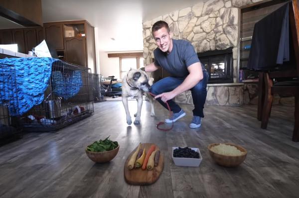 Chào đón những chú chó bị bỏ rơi bằng cách để chúng tự chọn nguyên liệu cho bữa cơm nhà đầu tiên