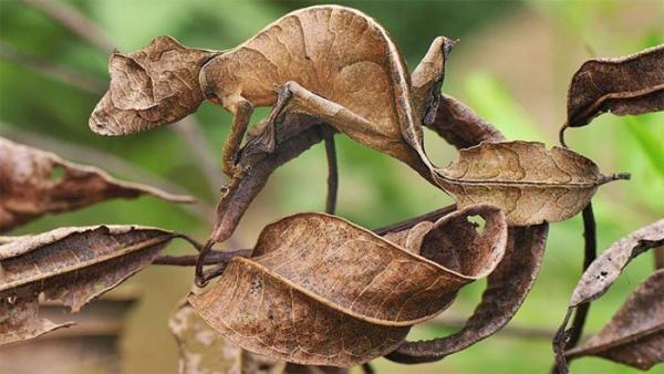 Những cao thủ 'ẩn thân chi thuật' của giới tự nhiên: Xem để biết đỉnh cao của tuyệt kỹ ngụy trang
