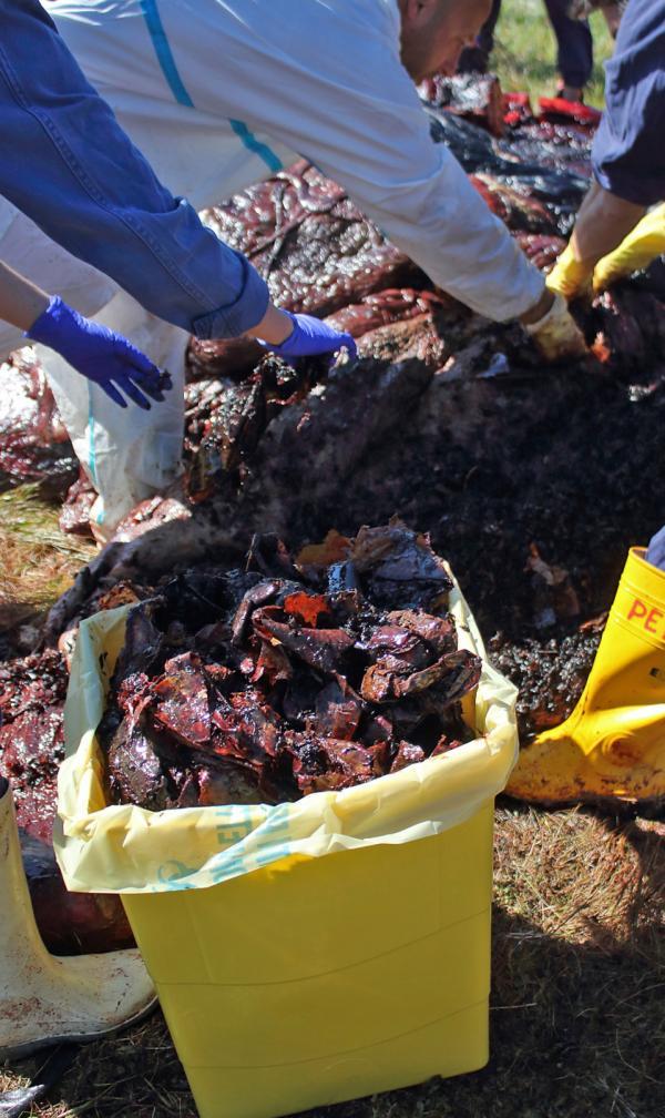 Nuốt 22kg rác thải nhựa, cá nhà táng đang mang thai chết đói vì không thể nạp thêm thức ăn