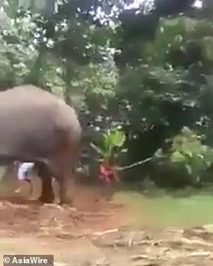 Phẫn nộ trước hình ảnh quản tượng trói và đánh chú voi già cho đến khi nó gục ngã