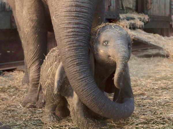 5 lý do khiến bộ phim 'Dumbo' 2019 không thể bay cao ở phòng vé