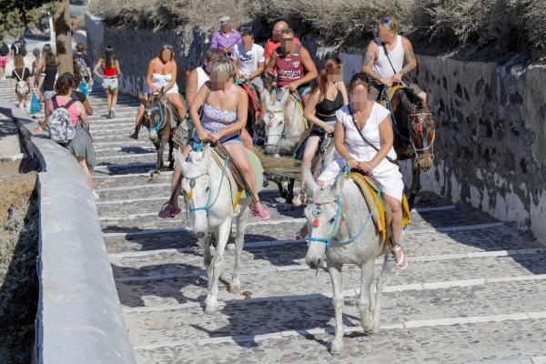Cưỡi lừa ở Santorini: Truyền thống thú vị hay hành hạ động vật?