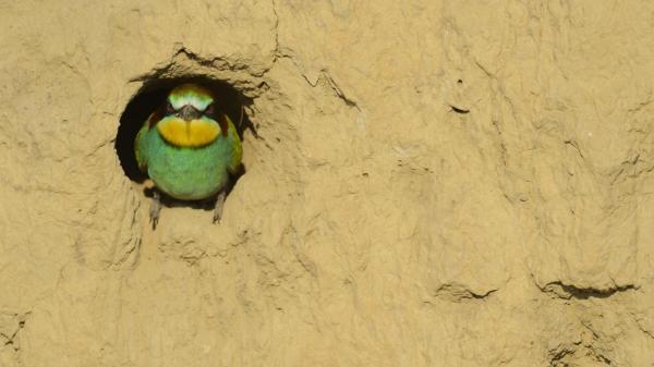 Ngay cả kiến trúc sư giỏi nhất của loài người cũng phải ngưỡng mộ những chiếc tổ chim tự nhiên này