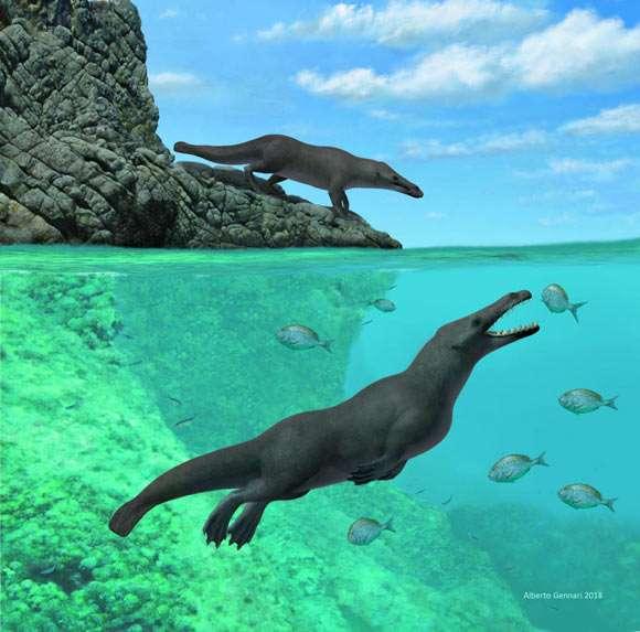 Phát hiện hóa thạch cá voi... bốn chân ở Peru