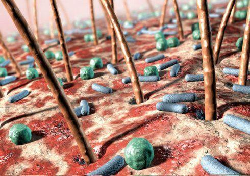 Trong cơ thể con người có bao nhiêu loài vi khuẩn và tổng trọng lượng của chúng là bao nhiêu?