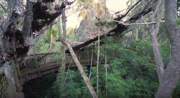 Cảnh tượng hoang tàn đổ nát trên hòn đảo bị Disney bỏ hoang suốt 2 thập kỷ