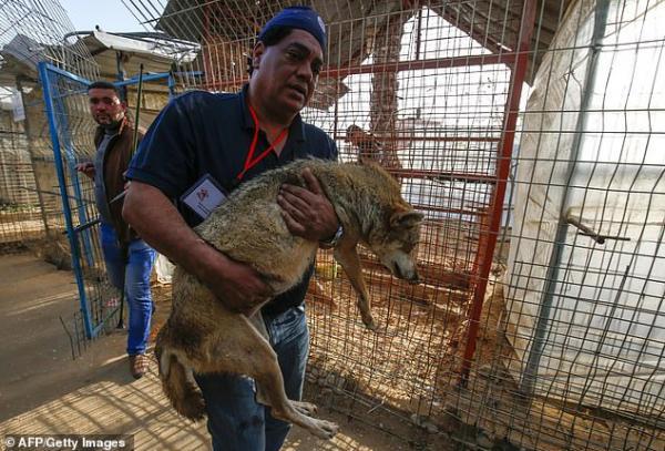 Hàng chục động vật ở vườn thú 'đau khổ nhất thế giới' đã được di tản