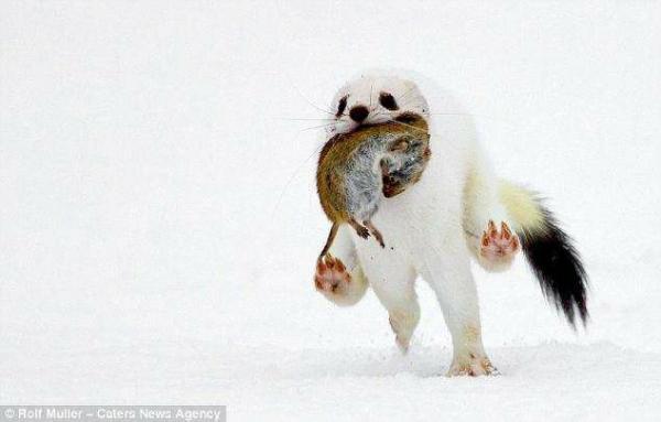 Những loài có vẻ ngoài hài hước nhất trong lịch sử tiến hoá của thế giới động vật