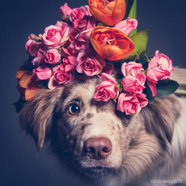 24 bức hình chứng minh chó là loài có khả năng biểu lộ cảm xúc bằng khuôn mặt tuyệt vời