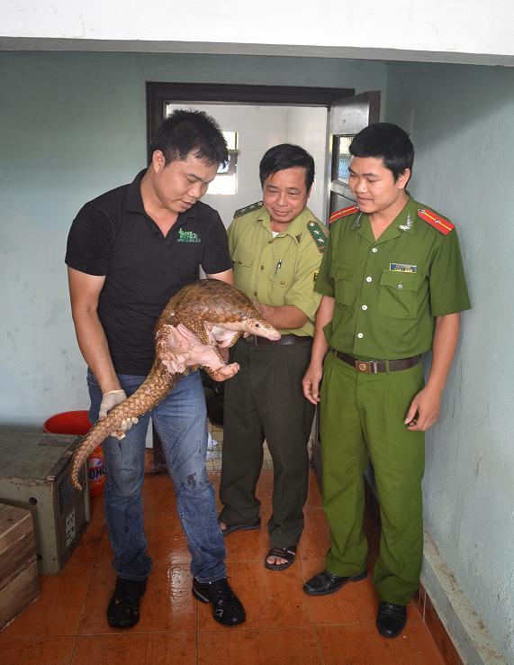 Sự thật đáng buồn: Việt Nam đang là đầu mối buôn lậu tê tê hàng đầu thế giới