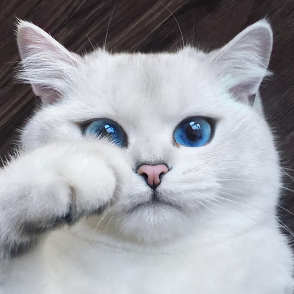 Mèo hoàn toàn có thể nhận ra tên của chúng, nhưng đáp lại hay không còn tuỳ tâm trạng