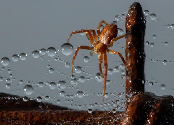 Đang lái xe tự dưng có em nhện nhảy ra 'say hi', hoảng quá đâm luôn vào tường
