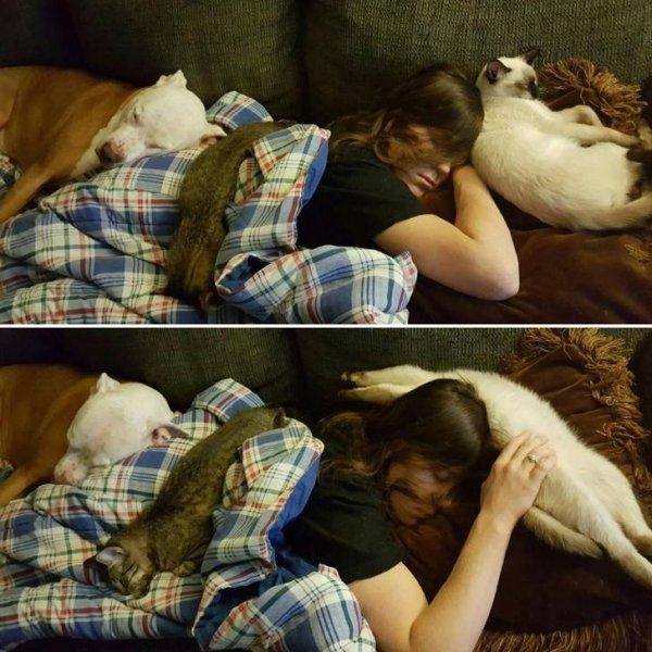 Nuôi càng nhiều thú cưng thì càng nhiều niềm vui, không tin hãy xem thử loạt ảnh sau đây