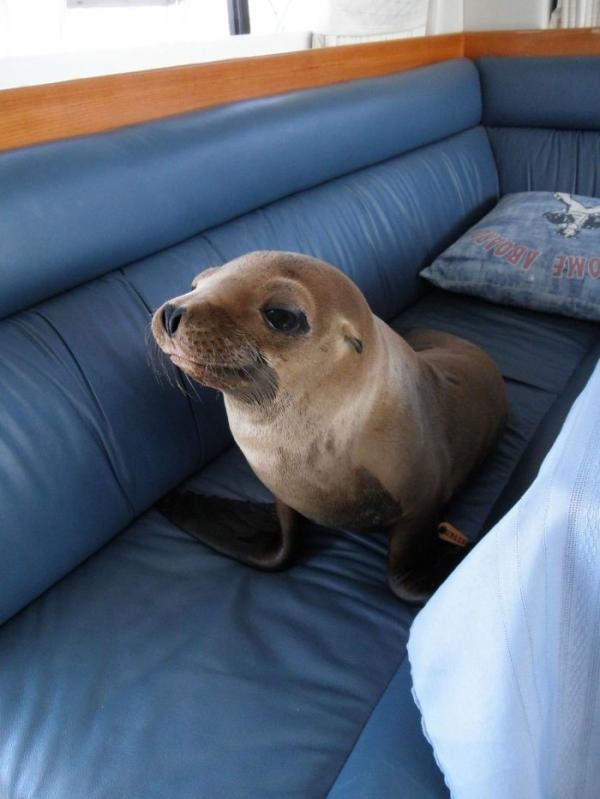 Cười đau bụng với loạt biểu cảm đanh đá của các loài động vật: 'Tôi nhường các ông hơi lâu rồi đấy'