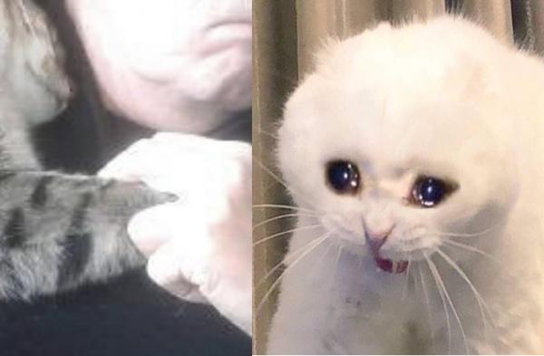 Chú mèo hoang đáng yêu nhảy vào lòng an ủi người đàn ông sau cuộc phẫu thuật