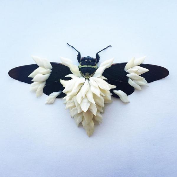 Sẽ ra sao nếu các loài côn trùng đều khoác trên mình một bộ 'áo giáp'?