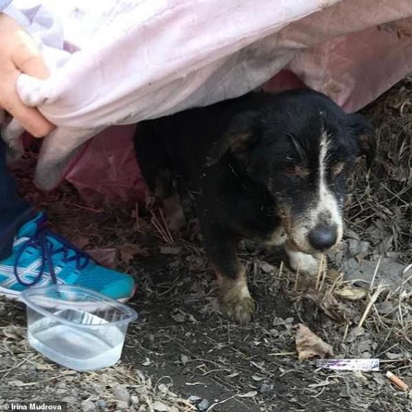 'Pet Sematary' phiên bản đời thật: Sau khi an táng chú chó sống lại và tự tìm đường về nhà