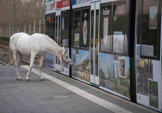 Ở nơi nào đó trên Trái Đất, ngựa có thể thản nhiên đi rong một mình giữa phố phường