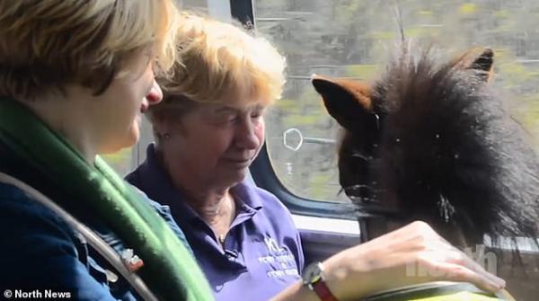 Câu chuyện đáng yêu về Digby - chú ngựa tí hon dẫn đường cho người khiếm thị ở nước Anh
