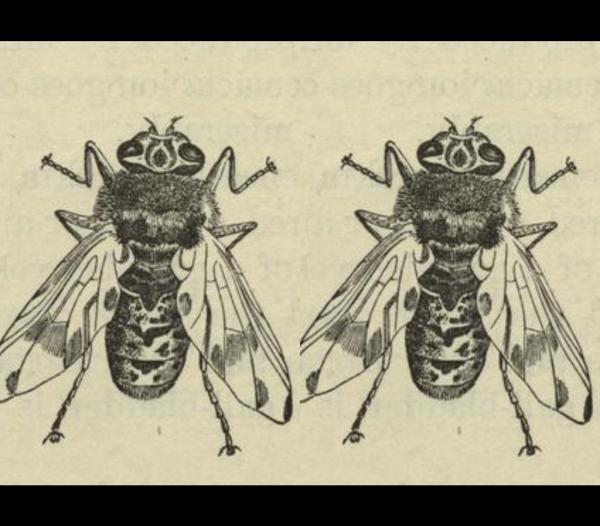 Ong, gián, cây và nhiều sinh vật khác có thể đang sống trong cơ thể bạn