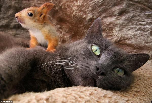 Mèo mẹ nhận bốn chú sóc mồ côi làm con nuôi: Một câu chuyện để bạn bắt đầu Tháng Năm thật ngọt ngào